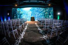 Wedding Ceremony Space at the Florida Aquarium in Tampa Florida - Photo: Love Storey Photography - Click pin for more photos www.orangeblossombride.com