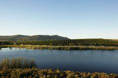 Beautiful views Lush Green, Vineyard, River, Outdoor, Beautiful, Vine Yard, Outdoors, Vineyard Vines, Outdoor Games