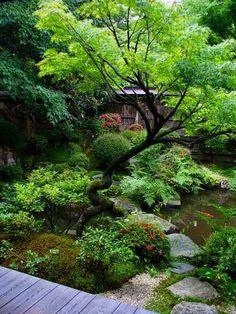 宝泉院:鶴亀庭園 Bonzai.....would love to re-create this in the Bronx