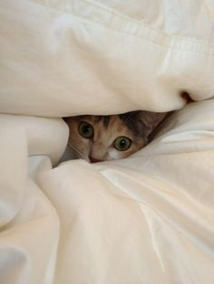 You can't find me!