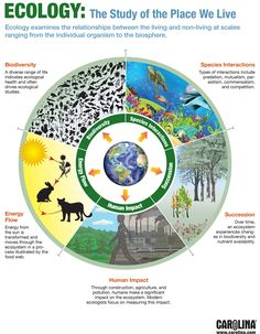 Infographic: Ecology: The Study of the Place We Live