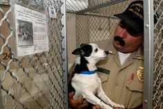 California Today: Should Shelter Dogs Be Vegan?