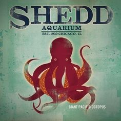 Shedd Aquarium Chicago Octopus original graphic illustration archival giclee art print by Stephen Fowler PIck A Size Illustrations, Graphic Illustration, Lago Michigan, Giant Pacific Octopus, Shedd Aquarium, The Blues Brothers, My Kind Of Town, Sign Printing, Chicago Illinois