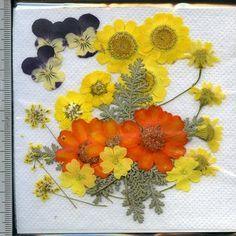 [押し花] ブログ村キーワード新聞紙に挟んで重しを乗せれば、数日で完成する押し花...