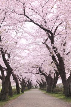 Japan in Cherry Blossom Season  - CountryLiving.com