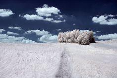 La pasmosa belleza de los árboles en la fotografía infrarroja de Przemysalw Kruk