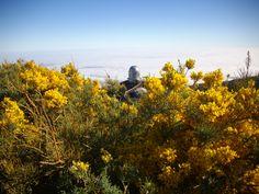 Se vislumbra un telescopio entre las flores. Roque de los Muchachos, isla de La Palma.