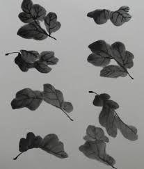 국화잎에 대한 이미지 검색결과