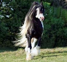 beautiful horses flowing manes - Bing Images