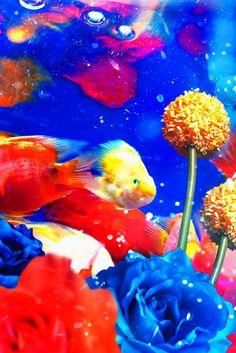 蜷川実花 colorful