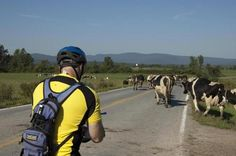 Bicycle Touring - bi