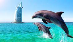 A beautiful picture of Dolphins captured near Burj Al Arab, Dubai