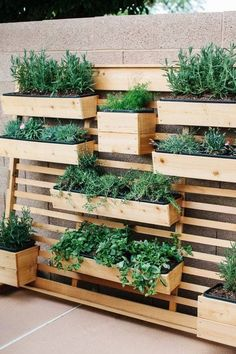 Vertical herb garden, wooden herb boxes