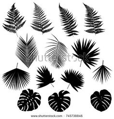 Set Silhouettes Leaves Tropical Plants Trees Stock Vector Royalty Free 745738846 Set Silhouettes Leaves Tropical Plants Trees Stock Vector Royalty Free 745738846 KC D goleath Tattoo Art Set of silhouettes of nbsp hellip pflanzen tattoo Palm Tattoos, Up Tattoos, Black Tattoos, Leaf Tattoos, Botanisches Tattoo, Wild Tattoo, Cover Tattoo, Cactus Tattoo, Plant Tattoo