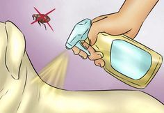 Spray your dog's coat to repel fleas. If your dog spends a lot of time romping around during the summer, using ACV may keep fleas away. Mix two cups of water and two cups of ACV in a clean spray bottle. Once a week, spray your dog's fur with the mixture. Dog Flea Remedies, Home Remedies For Fleas, Natural Home Remedies, Flea Remedy For Dogs, Home Remedies For Cockroaches, Herbal Remedies, Flea In House, Flea Spray For House, Insecticide