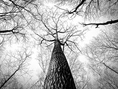 Worm's Eye View Photography of Naked Tree · Free Stock Photo White Branches, Tree Branches, Free Stock Photos, Free Photos, Free Pics, Free Images, Bing Images, Worms Eye View, Black And White Tree