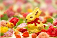 Lindt Goldhase. #easter #chocolate Lindt, Happy Foods, Easter Chocolate, Christmas Ornaments, Holiday Decor, Seasons, Hare, Easter, Xmas Ornaments