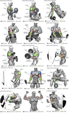Full Body Workout is part of Biceps workout - Post with 3006 votes and 121599 views Shared by Full Body Workout Shoulder Workout Routine, Full Body Workout Routine, Best Chest Workout, Chest Workouts, Gym Workout Chart, Gym Workout Tips, Fitness Workouts, Fun Workouts, Body Workouts