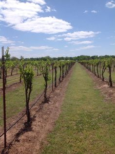 Stroll through our vineyards and visit the tasting room for a complimentary tasting of our Oklahoma grown wine www.canadianriverwinery.net
