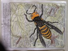 2nd Place Under 12: Asher from Deadly Insects and Arachnids Coloring Book