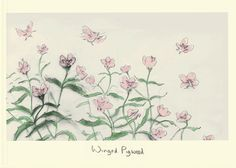 WINGED PIGWEED by Julian Williams for the Encyclopaedia of Plants and Animals with Unusual Names