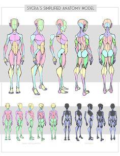 Sycra's Simplified Anatomy Model by Sycra on DeviantArt