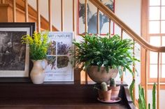Christmas Cactus: Tips for Growing, Care & Propagating Hanging Plants Outdoor, Hanging Planters, Indoor Plants, Cactus Flower, Cactus Plants, Christmas Cactus Plant, Formal Garden Design, Tropical, Hearth And Home