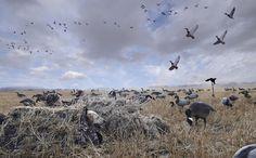 duck hunting Saskatchewan blind