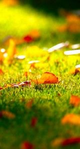 Top 20 Wallpapers Leaves On iphone Leaves Wallpaper Iphone, Autumn Leaves Wallpaper, Lawn Care, Pumpkin, Fall, Autumn, Pumpkins, Fall Season, Lawn Maintenance