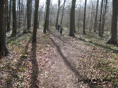 Whitwell Woods, between Clowne and Worksop, N.E. Derbyshire.