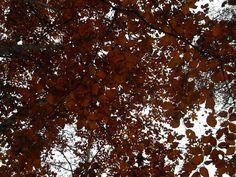 udazkena - otoño