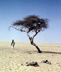 "How unbelievably sad. The ""world's loneliest tree""—an acacia in the midst of the Sahara desert—stood for decades as the only sign of life within a 400 meter radius, and was ultimately felled in 1973 by a drunk driver."