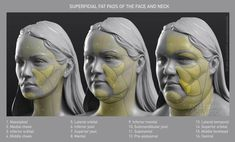 Uldis Zarins is raising funds for Form of The Head and Neck - by Anatomy For Sculptors on Kickstarter! Form of The Head and Neck. This is human anatomy for artists. Making Anatomy Visual And Understandable! Facial Anatomy, Head Anatomy, Body Anatomy, Anatomy Of The Face, Anatomy Organs, Anatomy Sketches, Anatomy Drawing, Anatomy Art, Zbrush Anatomy