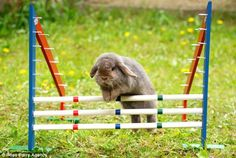 Danish bunny olympics!!!  I must go see this happen in person one day.