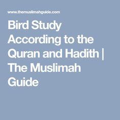 Bird Study According to the Quran and Hadith   The Muslimah Guide