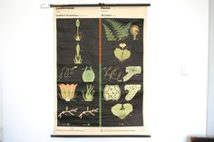 Vintage East German Pull-Down Chart Science Biology  Classroom Poster - Flora. €90.00, via Etsy.