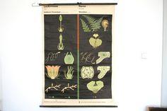 Vintage East German Flora Poster