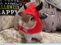 I'll Never Take It Off! That is certainly an appropriate costume for my bunny!