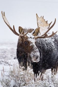 Keep your eyes out for moose #Alaska #Wildlife