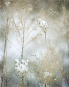 Winter Landscape Photograph - white snow woodland frost wonderland country pastel gray grey blue rustic 8x10 nature lace delicate