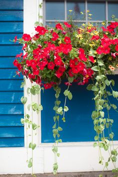 Window Flowers in Kennebunkport - Entouriste Window Box Plants, Window Box Flowers, Hanging Flowers, Window Boxes, Flower Boxes, Window Sill, Railing Planters, Garden Planters, Kennebunkport Maine