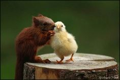 Interspecies gossip, look at the little chick