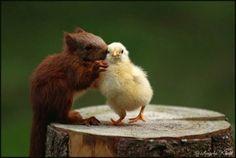 Interspecies gossip