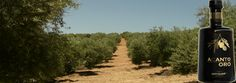 Aceite de Oliva - Andújar - Jaén