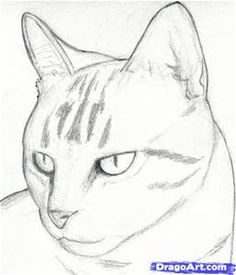 Realistic Drawings how to draw a cat head, draw a realistic cat step 3 Cat Sketch, Sketch Art, Dog Sketch Easy, Animal Sketches Easy, Easy Animal Drawings, Art Drawings Sketches, Cool Drawings, Drawings Of Animals, Tumblr Drawings Easy