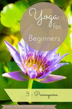 Yoga for Complete Beginners - Pranayama