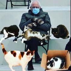 Bernie Memes, Funny Instagram Memes, Clean Memes, Bernie Sanders, Mittens, Haha, Funny Pictures, Hilarious, Funny Things