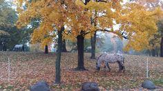 Autumn in Kaisaniemi park, Helsinki (with horses from Circus Finlandia)