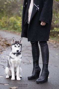 The Jacket and the Husky.