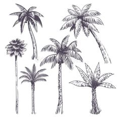 Palm Tree Sketch, Palm Tree Drawing, Tree Sketches, Plant Drawing, Engraving Illustration, Plant Illustration, Coconut Tree Drawing, Palm Tree Tattoo Ankle, Dates Tree